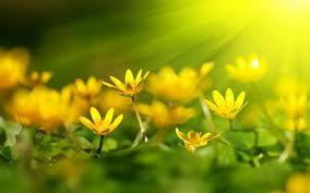 may bright